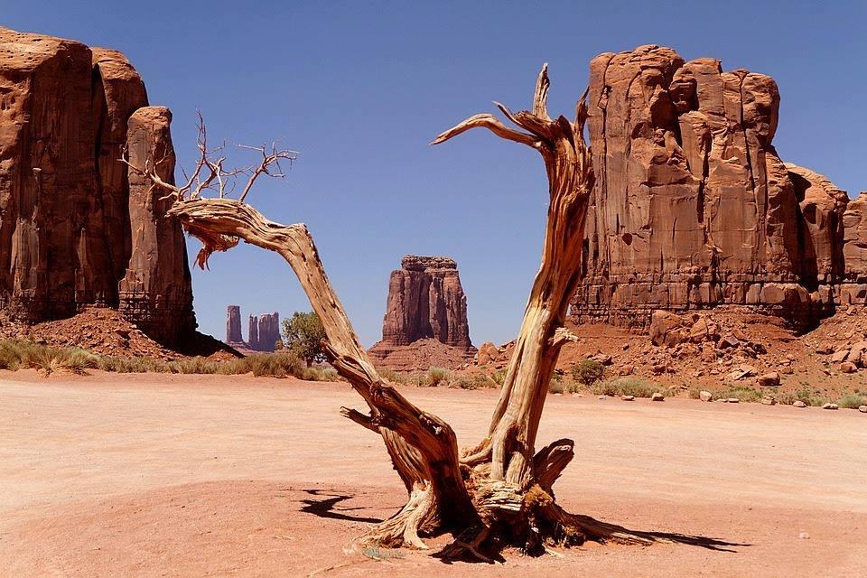 arbre mort à Monument Valley