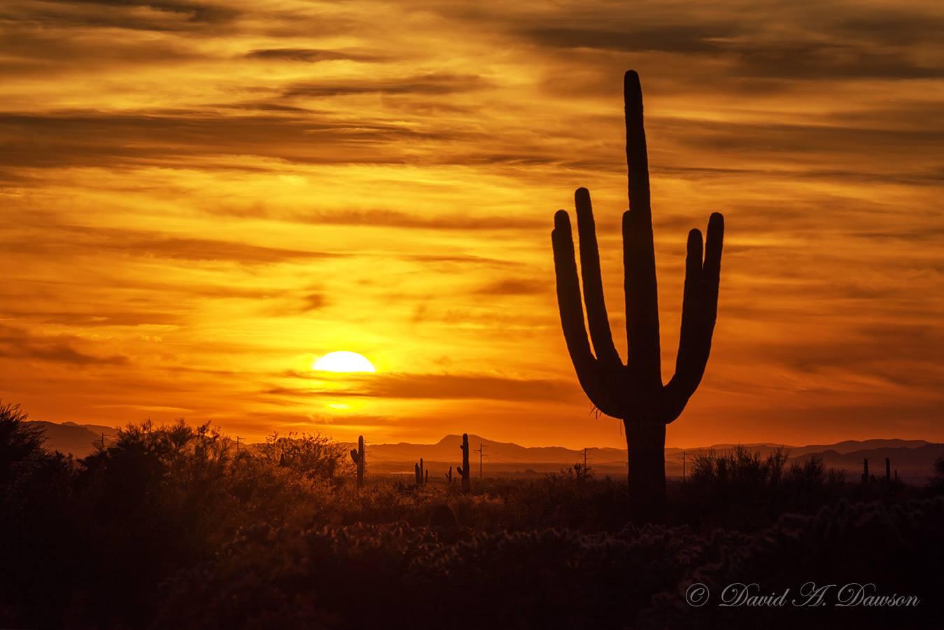 Un cactus Saguaro près de Tucson