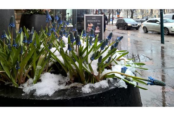 Schnee in Helsinki