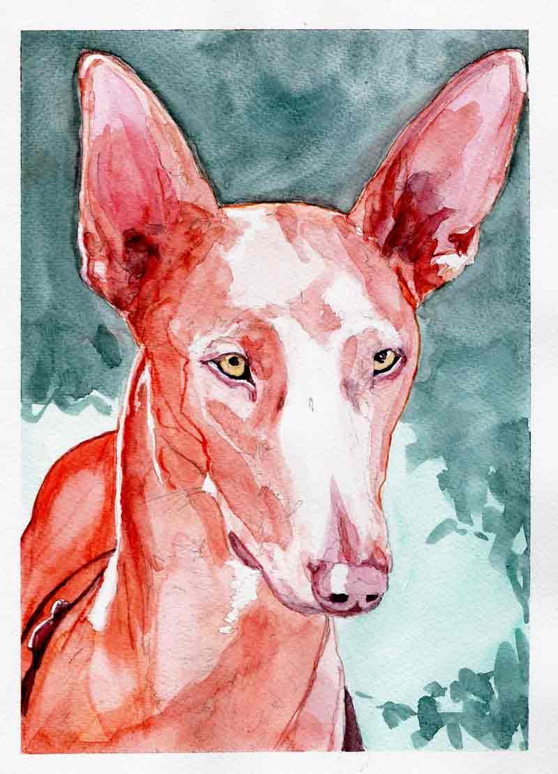 Luna Hampton, lévrier du Pharaon (aquarelle)