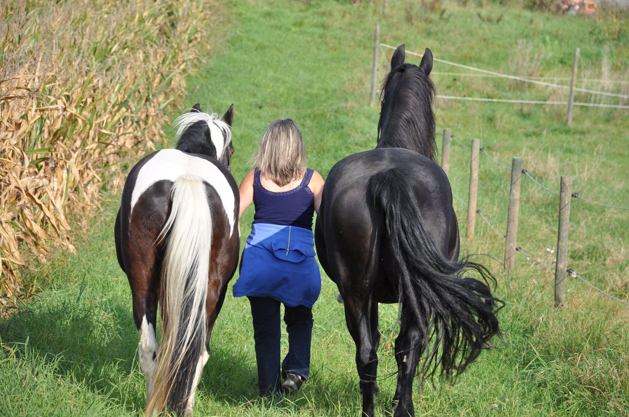 Pferde kennen den Weg
