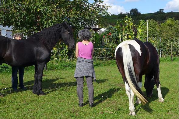 Ein Tag mit Pferden