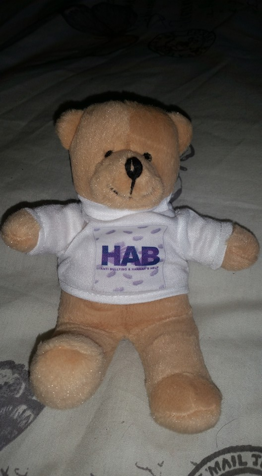 small HAB bear