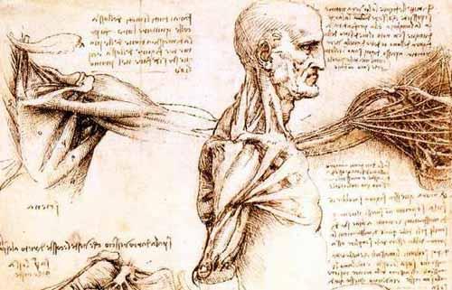 Anatomia e chirurgia