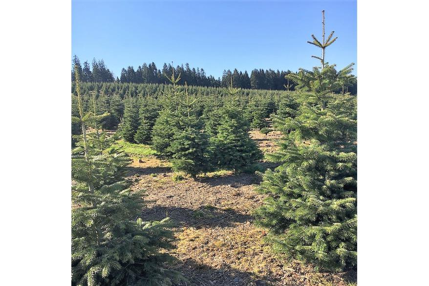 Gartencenter Weihnachtsbäume bestellen