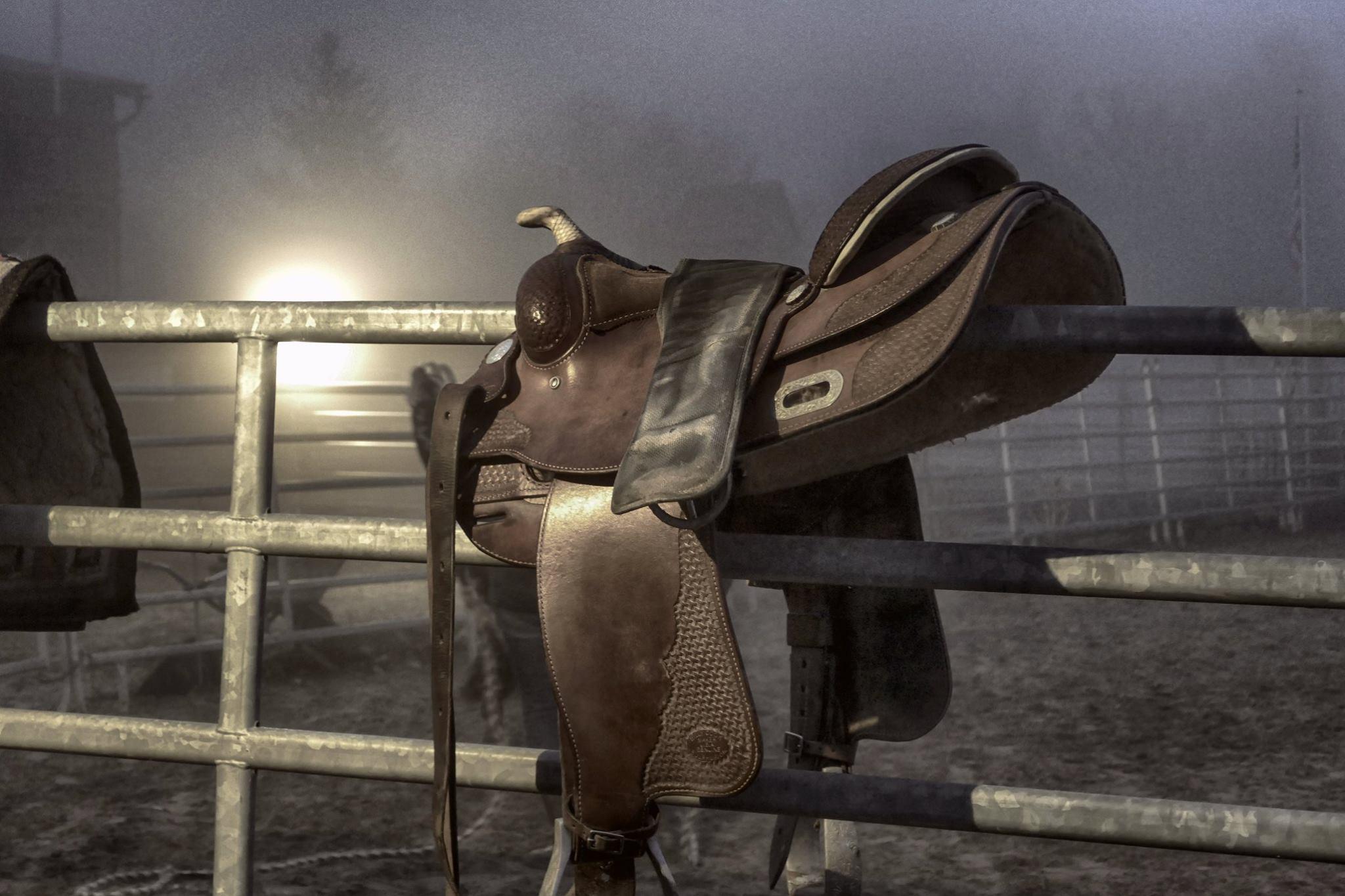 Einführung Pferd & Sattel