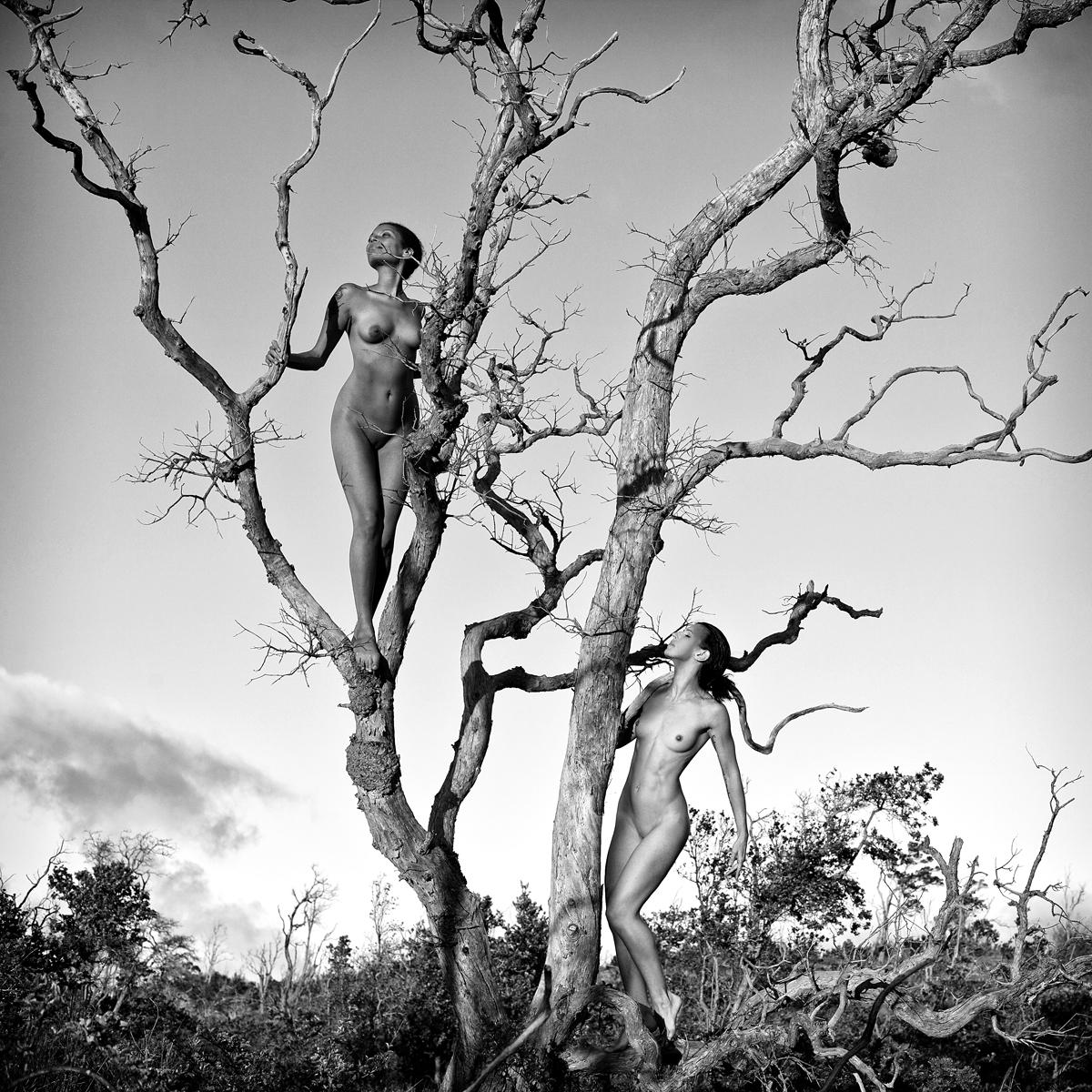 Temptation Tree