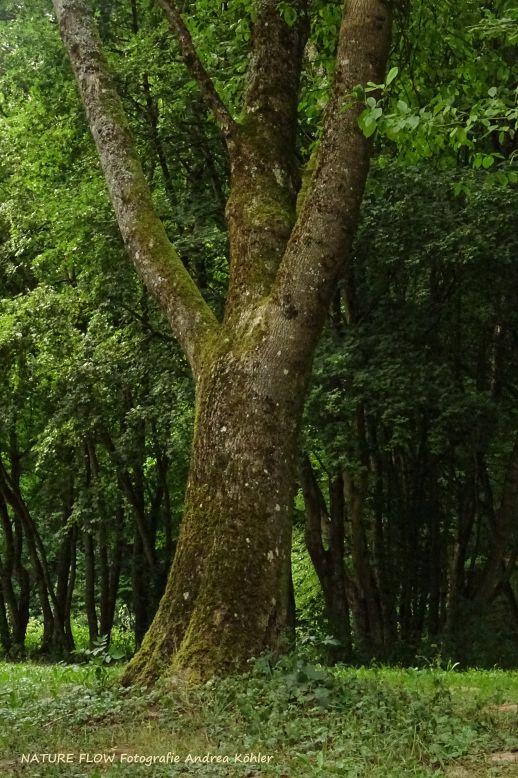 Baum Naturnah