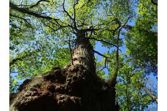 Naturnah Baum