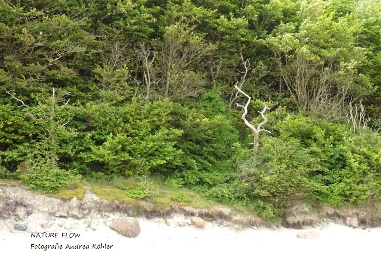 Nature Flow