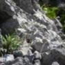 Monte Zermula, Plattner, Nassfeld, Gipfelsieg 3