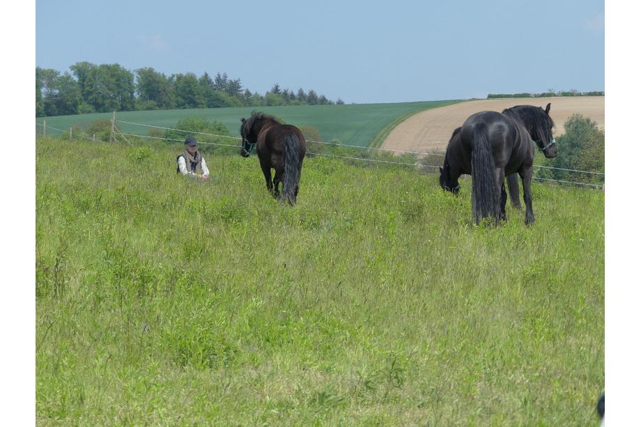 Pferdegestütztes Coaching auf der Koppel