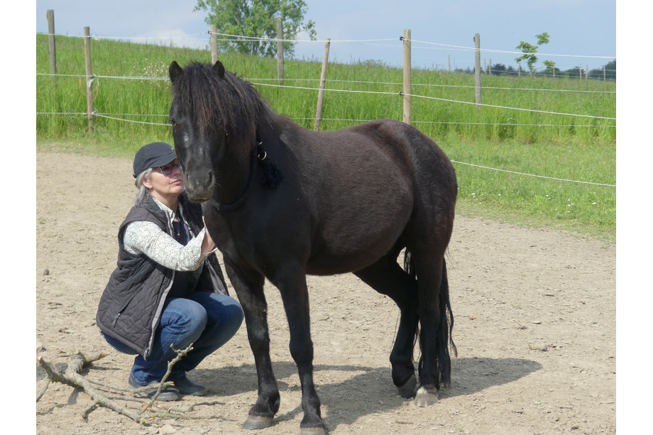 Pferdegestützes Coaching Ausbildung