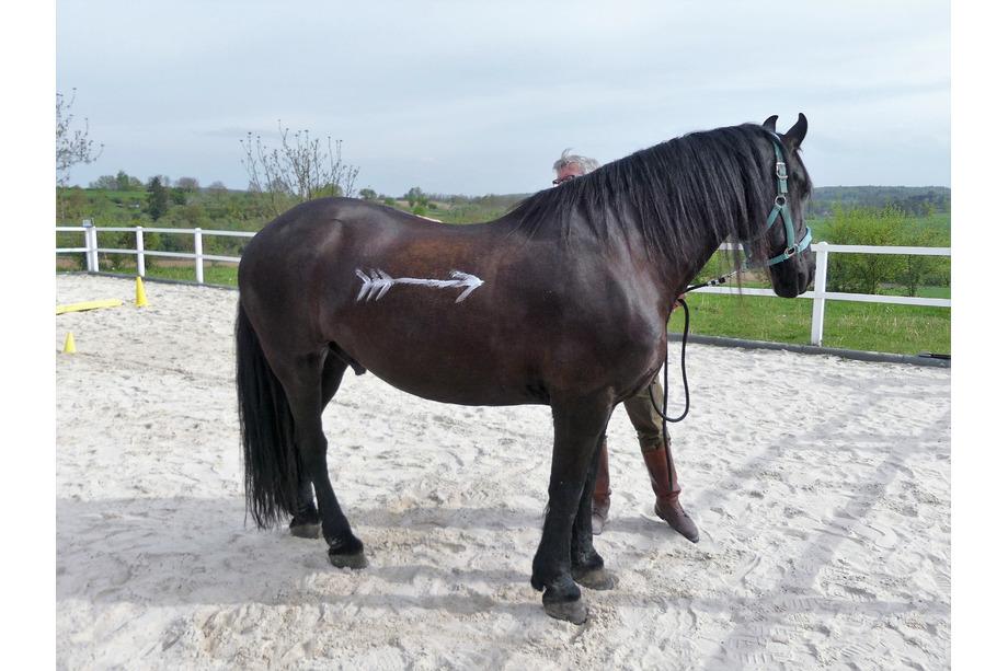 Pferd im Teambuilding
