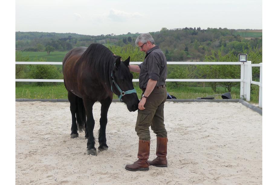 Alois im Teambuilding mit Pferden