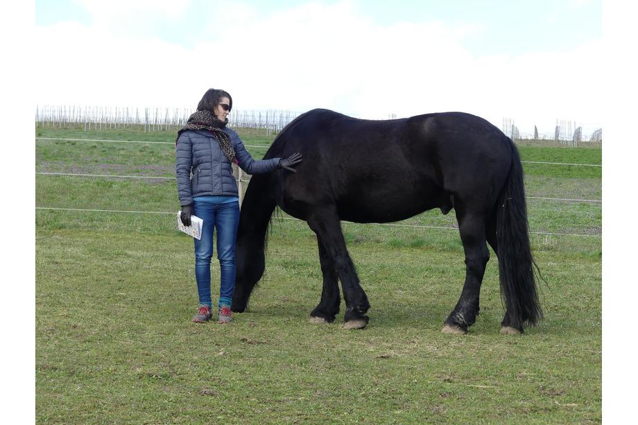 Begegnung mit Pferd auf Wiese