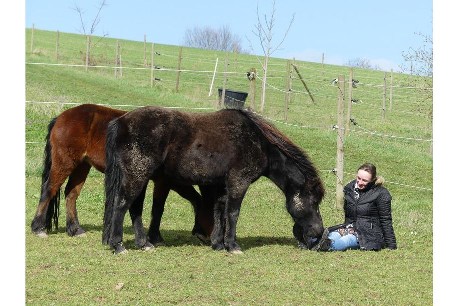 Frau sitzt beim Pferdecoaching auf Koppel