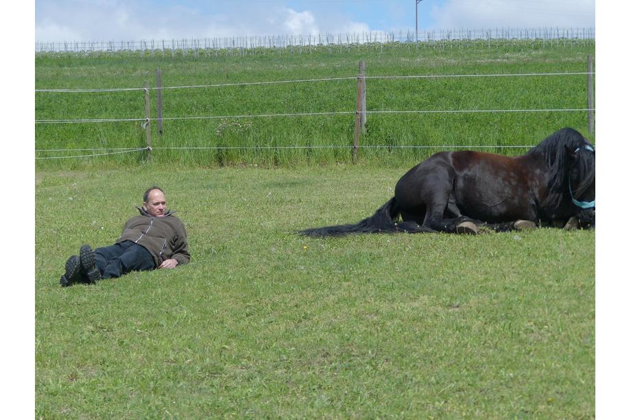 Ressourcentraining mit Pferd