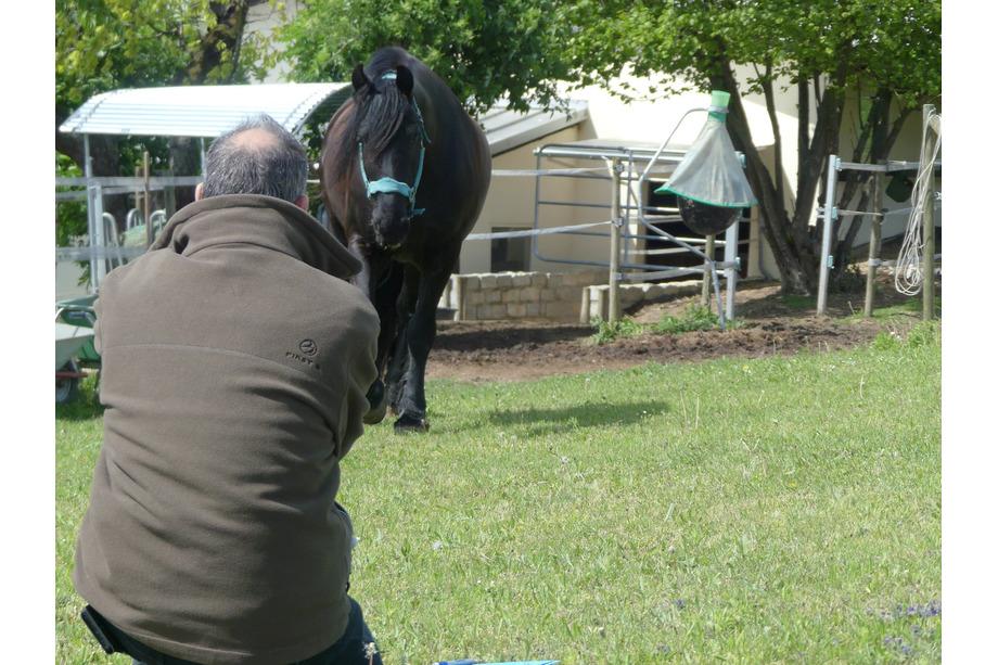 Don im Coaching mit Pferd