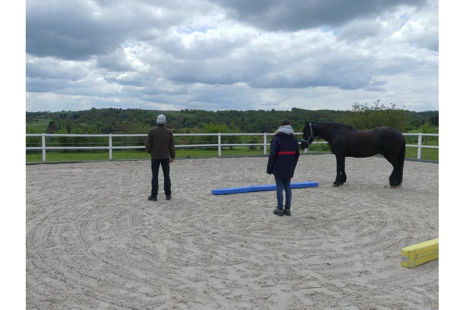 Zeitfelder in einem pferdegestützten Coaching