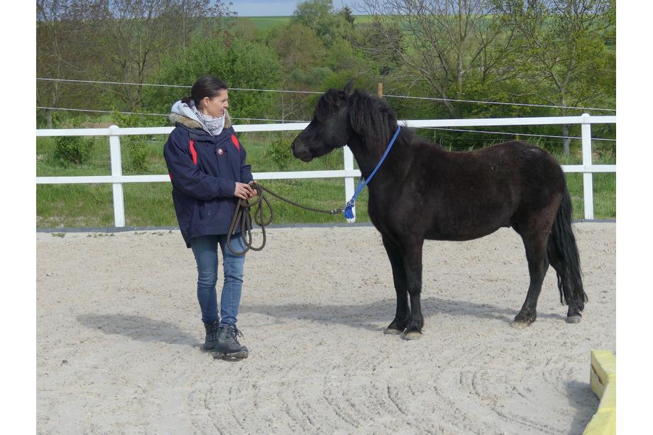 Henry als Coach mit Pferd