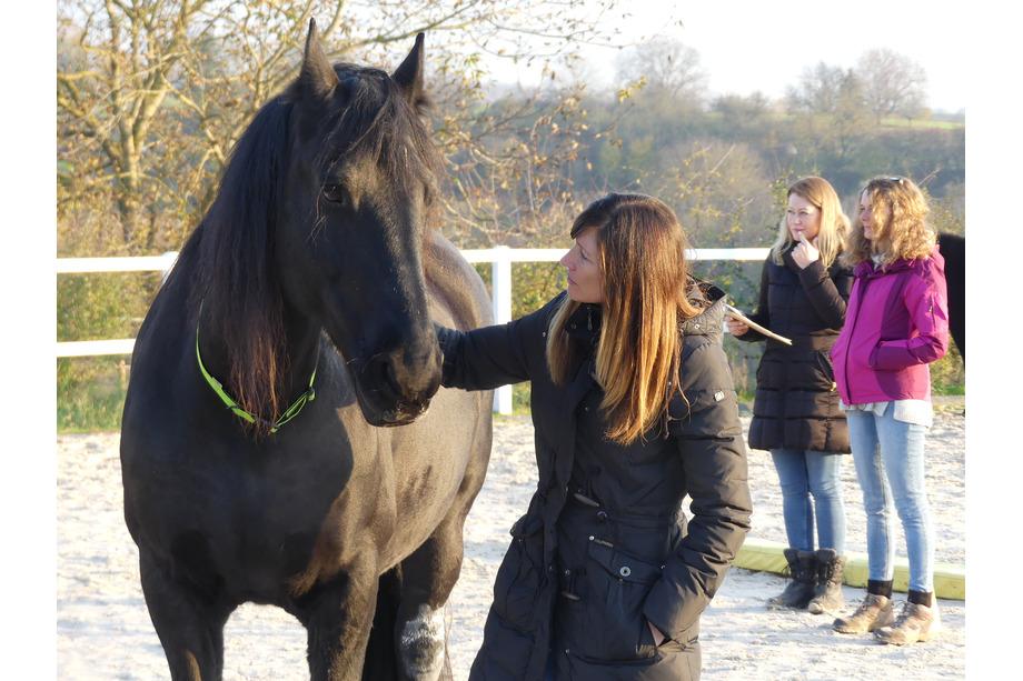 Teilnehmerin im Pferdecoaching