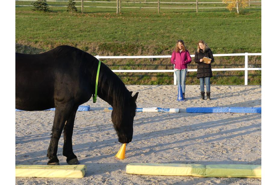 Systemisches Coaching mit Pferden