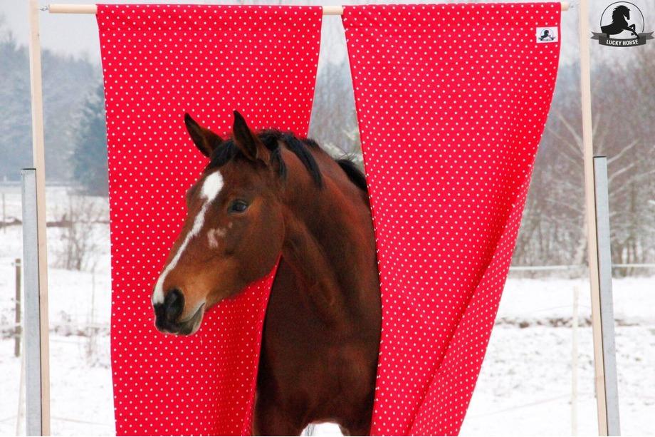 Pferd im Vorhang