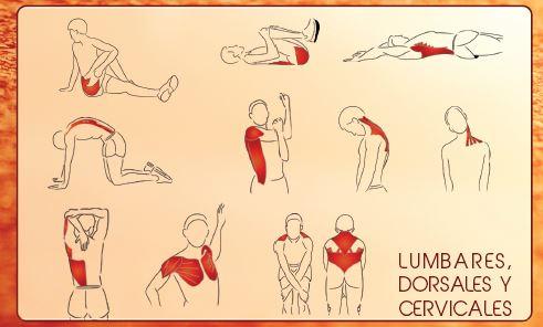 Estiramientos lumbares dorsales y cervicales
