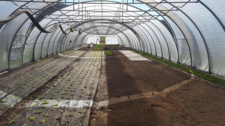 Jungpflanzen Tunnel Frühjahr