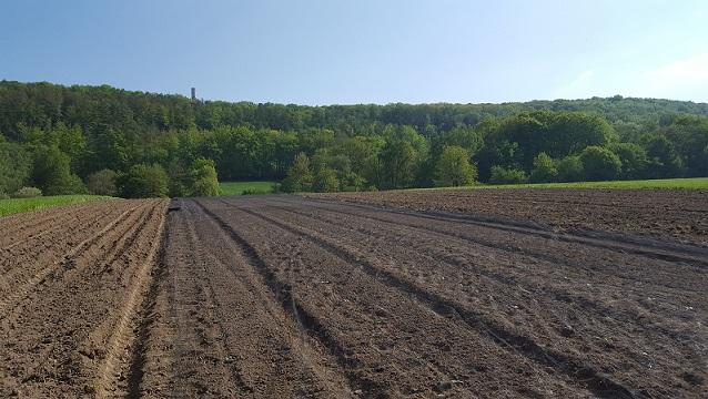 Feldfrucht Kürbisse Kartoffel