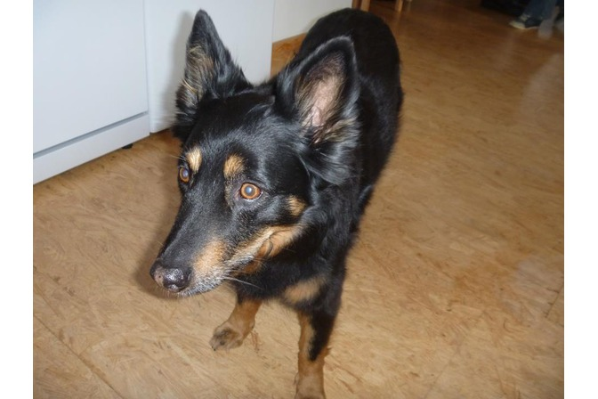 Therapie- und Coaching-Hund Rana