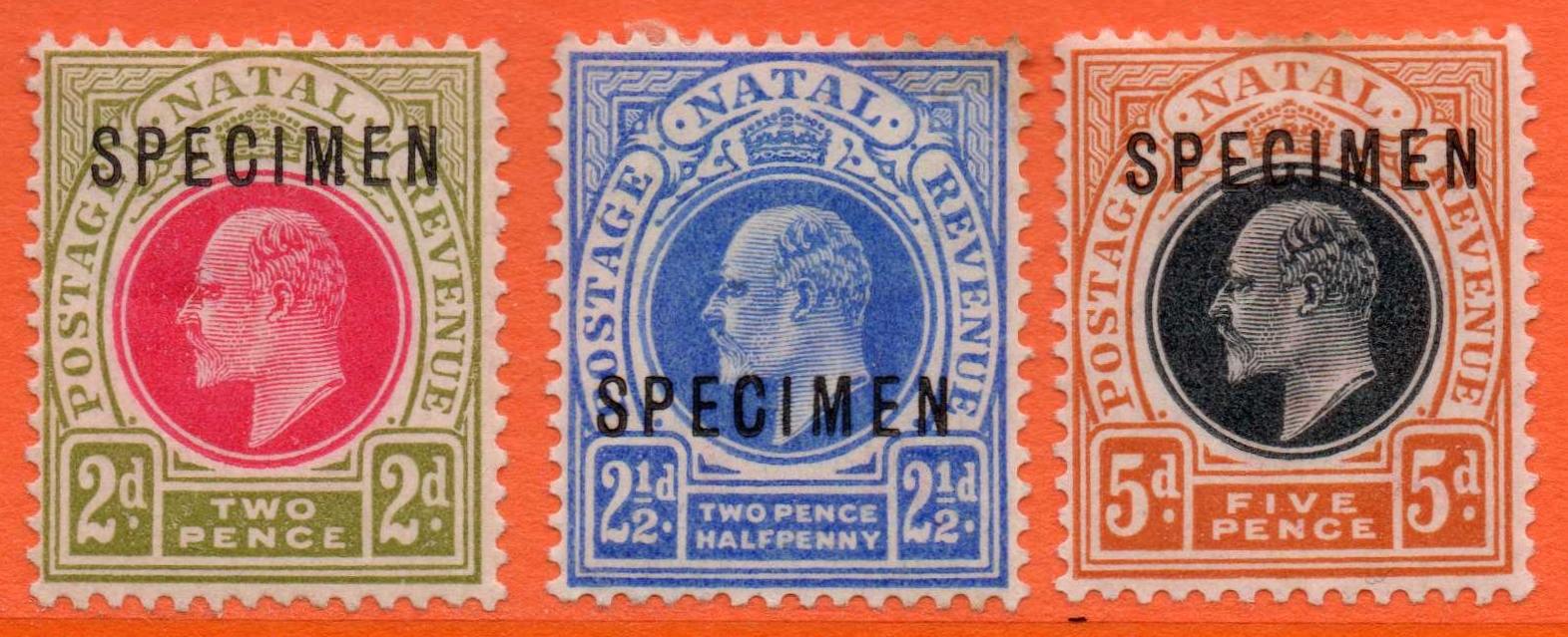 Natal Edward VII 1902-03 SPECIMENS (Three Values)