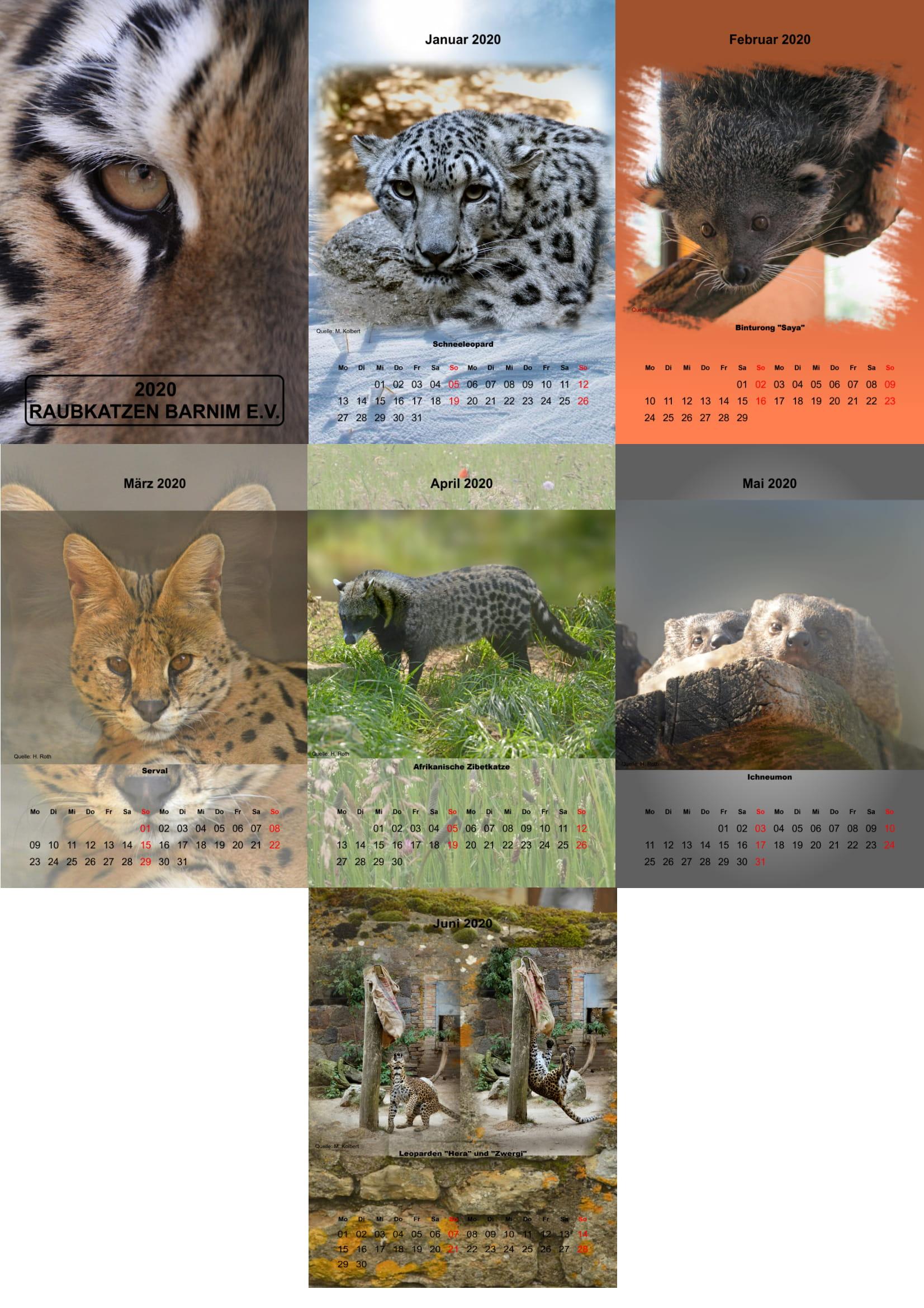 Hier direkt kaufen: Raubkatzen-Kalender 2020