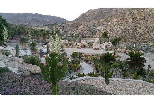 photo_of_cactus_nijar