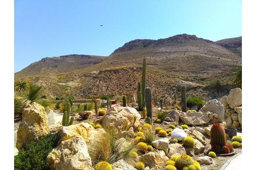 phoo_of_cactus_gardens
