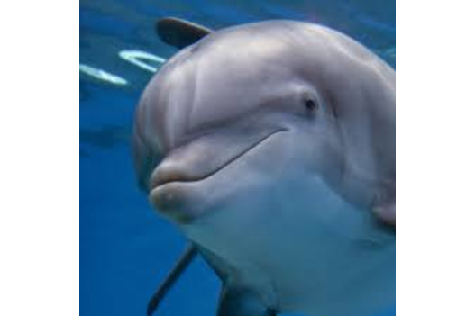 close_up_photo_of_friendly_looking_dolphin