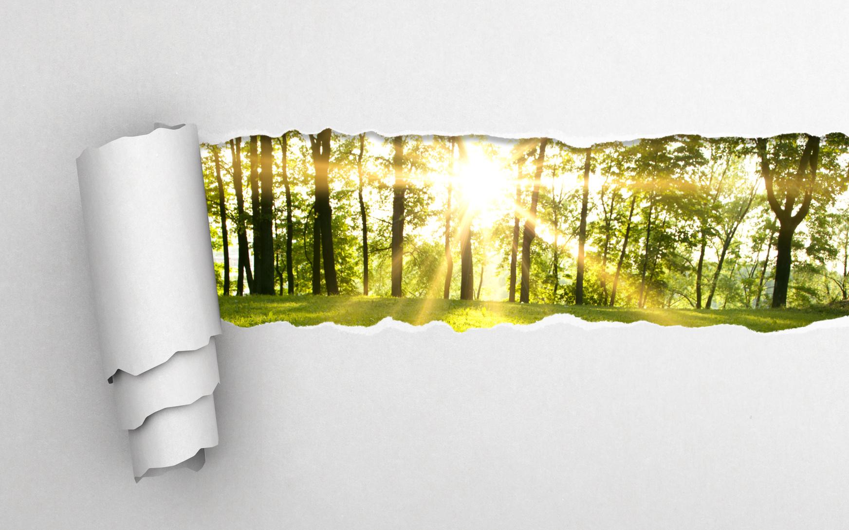 Wald und Papier: Nachhaltiger Papierkonsum