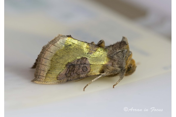 Moth trapping