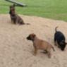Welpen Hundeplatz