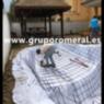 Construcción Piscina y cama de junco africano