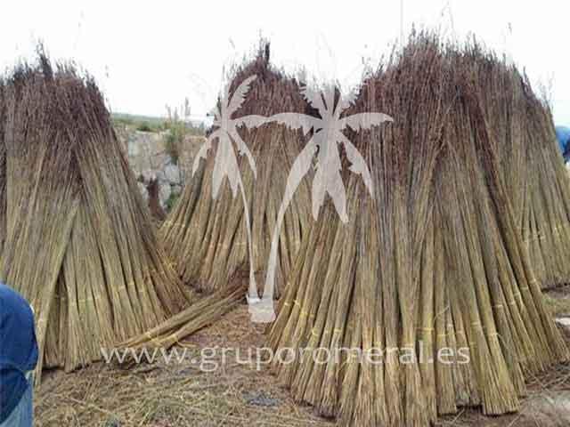 Verdadero junco africano para pergolas