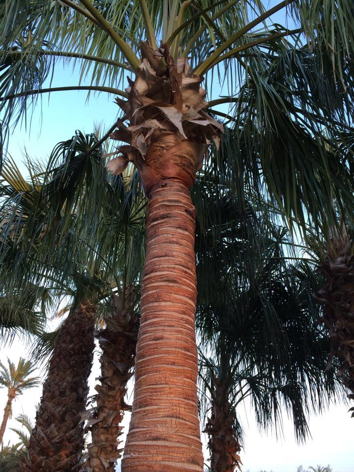 #Pide #tu #pedido #de #palmeras #l