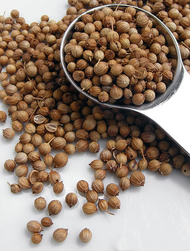 Coriander Seed Essential Oil 10ml