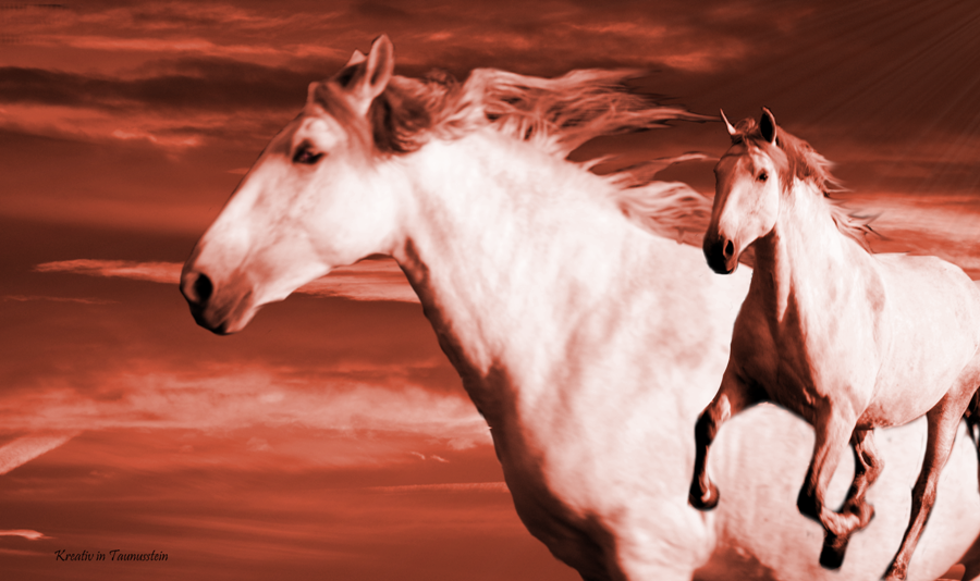 Pferd rot