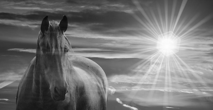 Pferd mit Stern
