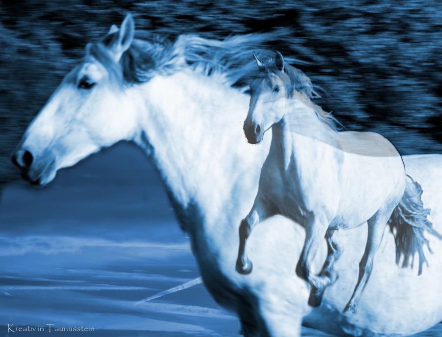 Pferd blau