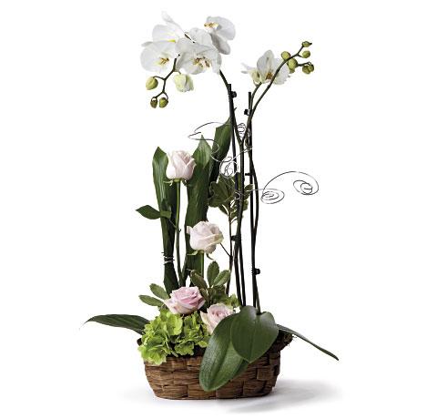Lineal con Orquideas en base rustica. Online 025