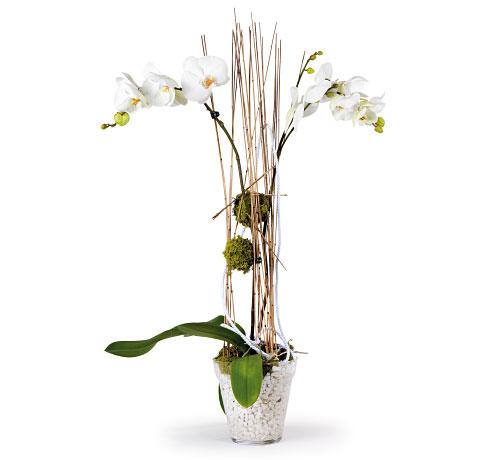 Orquídea  blanca con estructura. Online 023