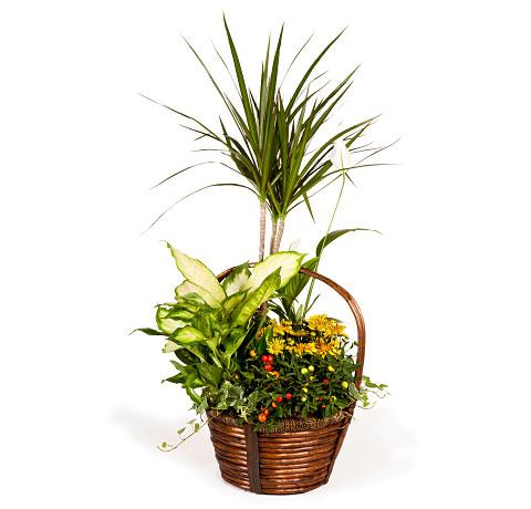 Cesta plantas maxi. Online 017